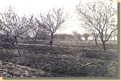 The Peach Orchard - 1863
